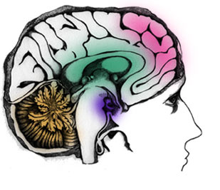 BRAIN can be stimulated with protein & VITAMINS                 to work better