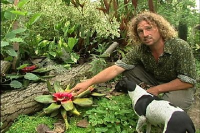 IN NO FREEZE STATES, tropical plants                     work in garden. THROW DOWN a dead LOG as a garden                     feature