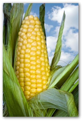 corn, home grown, the onliest way
